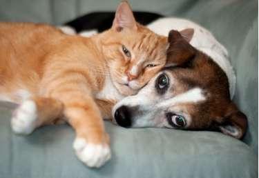 files/news/hilangkan-trauma-pada-hewan-941767e381273b0_cover.jpg